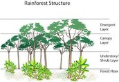 Layers of the Rainforests