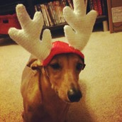 but I'm NOT a reindeer!