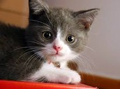Adopt!! Or else:)