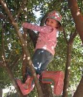 Cuando yo era joven escalaba el árbol.