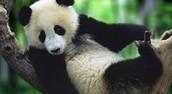 Saving Pandas