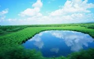 grassland with a nice pond