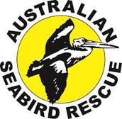 seabird rescues logo