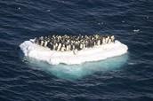 Global Warming effecting animals