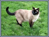 What are some ways to keep your cat healthy?