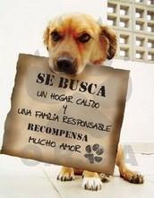 Para adoptar un animal debe saber que, algunas de las condiciones legales son las siguientes: