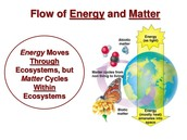 Flow of Energy and Matter