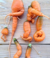 Mutant Vegetables in Fukushima