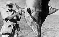 Hemingway and his Fish