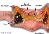 Internal Earthworm - part 2