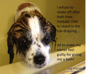 Some dogs hate baths