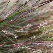 State grass