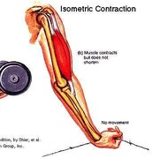 Isometric Muscle Contractions