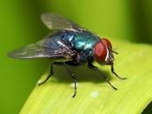 Fly spray Recipes