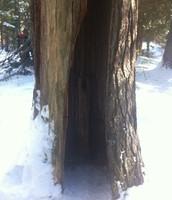 No ordinary tree...
