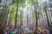 Welcome to Electric Forest
