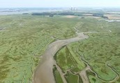 Ways to Prevent the Loss of Marshes
