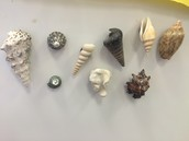 Some of our favorite shell magnets