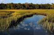 A marsh like the ones the Ojibwe would of lived by