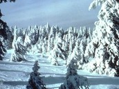 Boreal during the cold climate