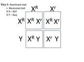Punnett Square of Aicardi Syndrome