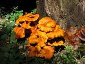 decomposer/fungi