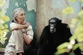 ג'יין גודול יושבת ליד קוף