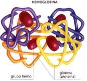 Hemoglobina (Hb)