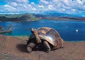 Aprende más de la flora y fauna en las Islas Galápagos