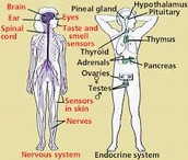 Other systems our body system interacts with