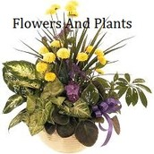 Take Into Consideration Sending Out Flowers And Plants To A Person In Different Events