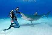 What Sharks Are Realy Like
