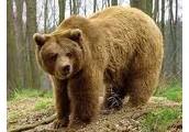 Polowanie na niedźwiedźa