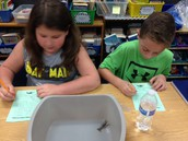 Researching Crawfish in Ms. Extin's and Ms. Jancich's Room