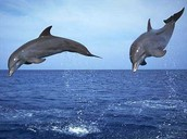 Dolphins in the air