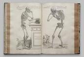Andreas Vesalius's Achievements