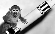 Iran attempts to launch monkey into space