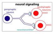 Long Distance - Neural