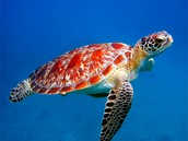 Satellites Tracking Turtles