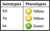 PHYNOTYPE
