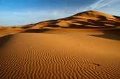 SAHARA DESERT NEWS