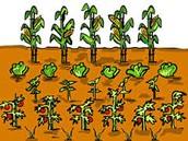 Community Garden Plots Available