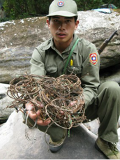 Forest Ranger with Wire traps