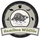 Hamilton Wildlife