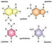 Breakdown Of Nucleic Acids Into Atoms