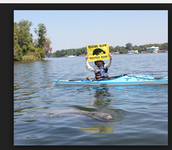 Man With Manatee Waring Sign