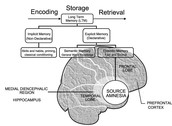 The brain during amnesia