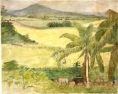 Sugar Cane Field, Jamaica, 1808-1815