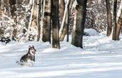 ריצה בשלג