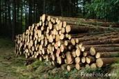Lumber Opportunity!